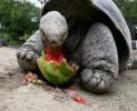 Nom Nom Nom Loving that Watermelon