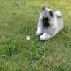 Dog 1 Dandelion 0